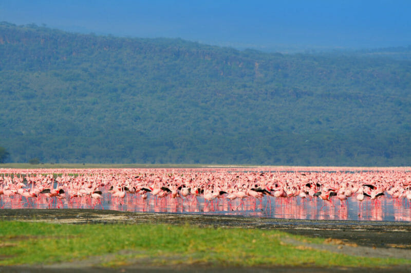 "alt="" 10 Highlights in Kenia"""